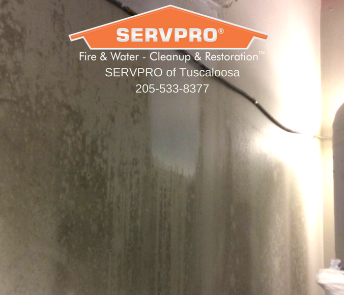 Surface Mold Cleaning Before
