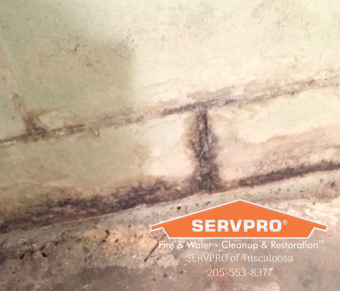 Mold in Basements After