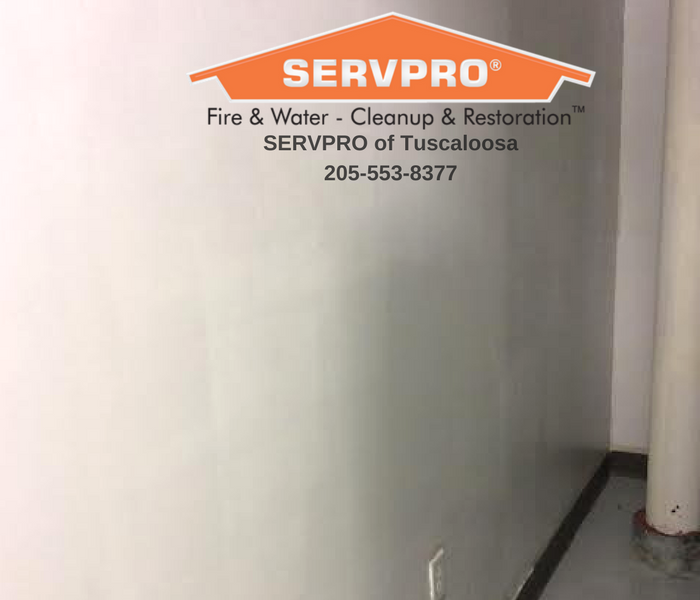 Surface Mold Cleaning After